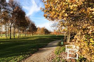 Hole 15 herfst-Golfclub Flevoland